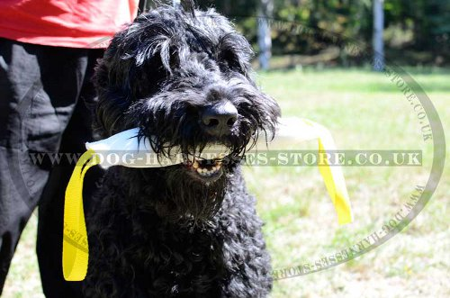 Russian Terrier Training