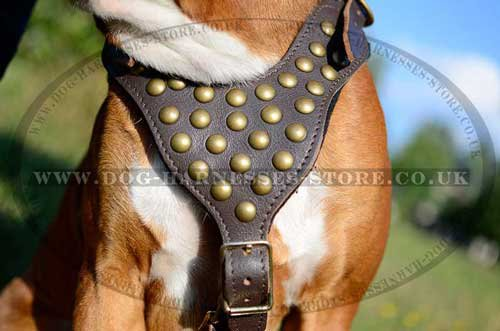 Boxer Dog Harness with Studded Chest Plate for Easy Walking