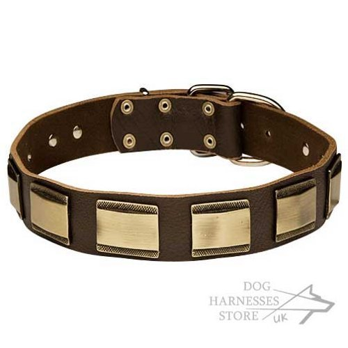 Gorgeous Leather Dog Collar with Bronze-Like Wide Brass Plates