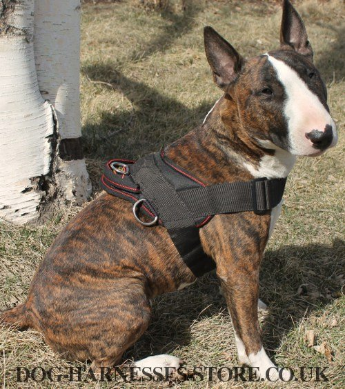 Bull Terrier Harness UK Nylon