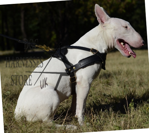 Leather Dog Harness for Bull Terrier Pulling, Tracking, Training