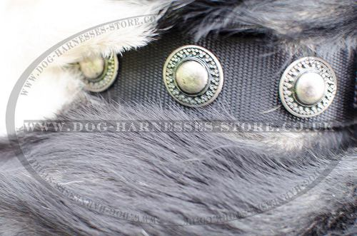 Nylon Dog Collar with Silver Conchos for Swiss Mountain Dog