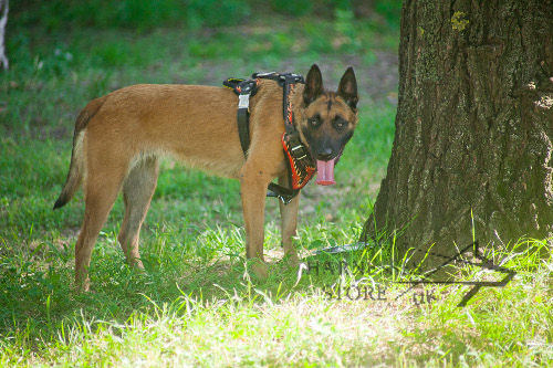 "Designer Dog Harness with ""Flame"" Ornament for Belgian Malinois"
