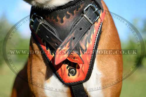 "Designer Dog Harness ""Flame"" Style for German Boxer Training - Click Image to Close"