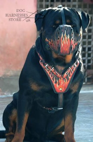 "Designer Dog Muzzle Leather with ""Flame"" Painting for Rottweiler"