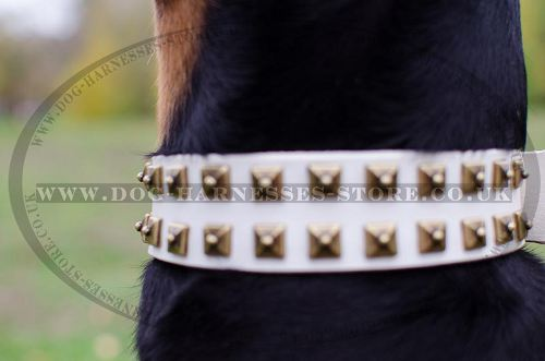 White Dog Collar Brass Studs for Doberman New Limited Edition!