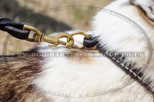 Dog Choke Collar for Husky, Natural Leather