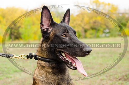 Rolled Leather Dog Collar for Belgian Malinois, Silent Control