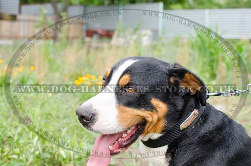 Dog Collar Name Plate of Nylon for Swiss Mountain Dog