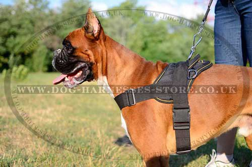 Boxer Harness UK