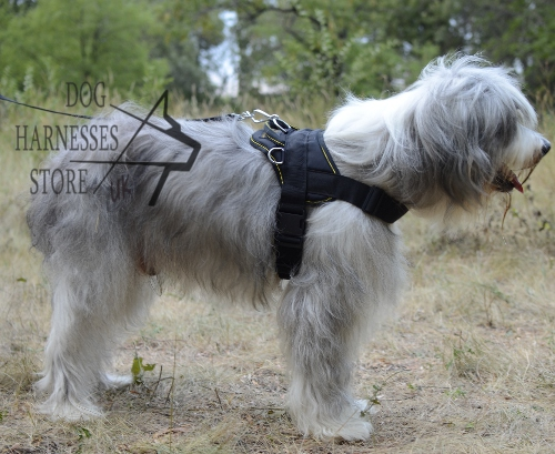 Walking Harness UK for Southern Russian Shepherds and Others!