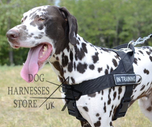 Dalmatian Harness UK