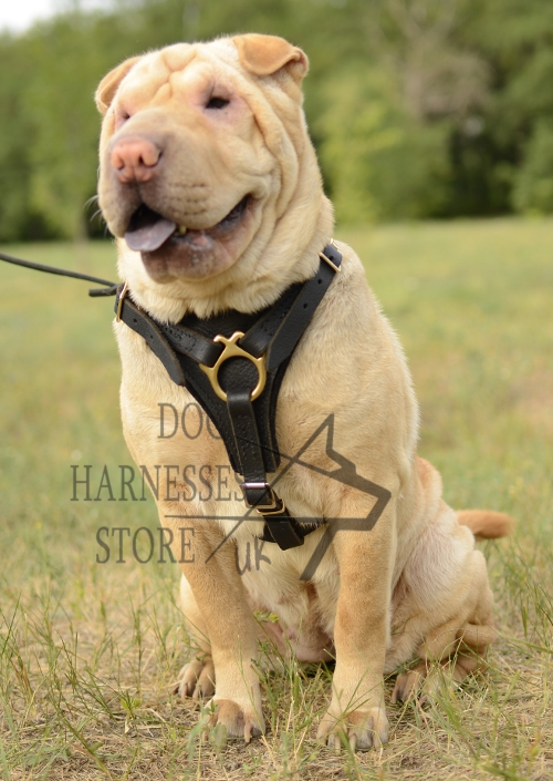 Harness for Shar Pei