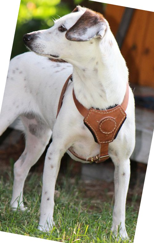 Small Hunting Dog Harness