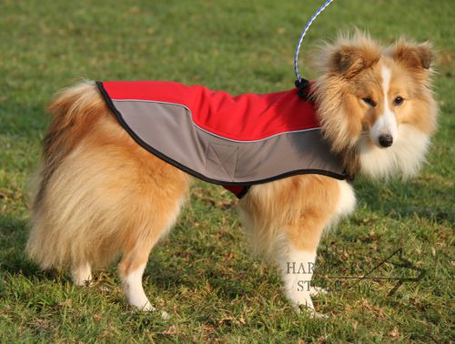 Sheltie Is Perfect for Children