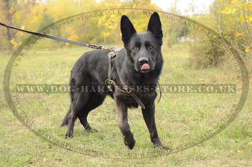 Dog Pulling Harness for German Shepherd, Strong UK