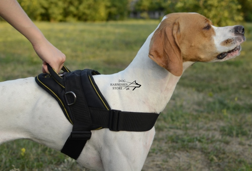 nylon harness for english pointer