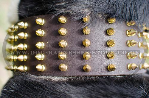 Extra Wide Leather Dog Collar with Spikes for Swiss Mountain Dog