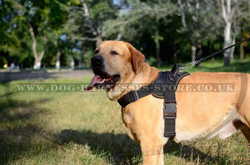 Dog Training Harness Nylon for Golden Retriever, Extra Strong - Click Image to Close