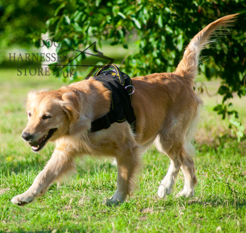 Labrador Harness For Walking Training Sport 163 30 60