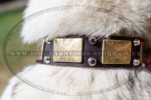 Handmade Dog Collar for Laika, Designer with Nickel and Brass