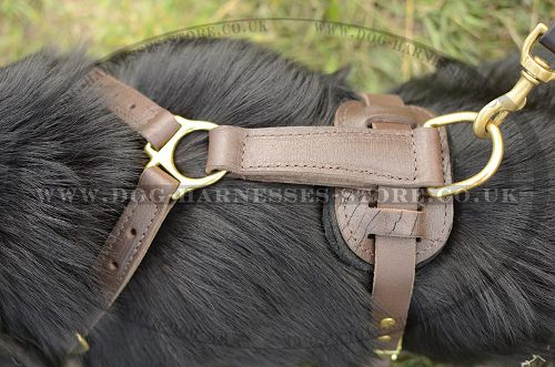 Strong Dog Harness for German Shepherd, Handmade of Leather