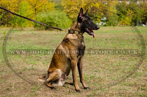 Handmade Leather Dog Collar New Style for Belgian Malinois