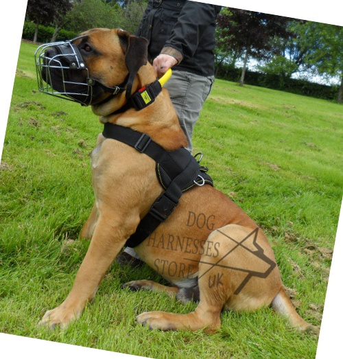 Mastiff Harness UK