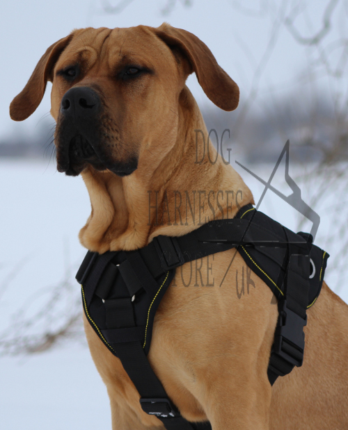 Dogo Canario Harness UK