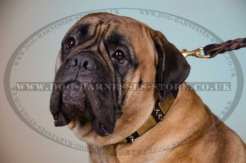 Leather Bullmastiff Collar with Decoration