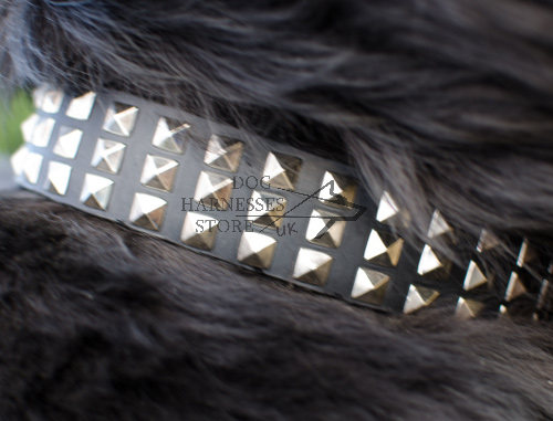 Leather Dog Collar with Nickel Pyramids for Newfoundland