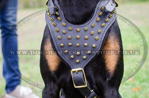 Dog Walking Harness Leather with Brass Spikes for Doberman