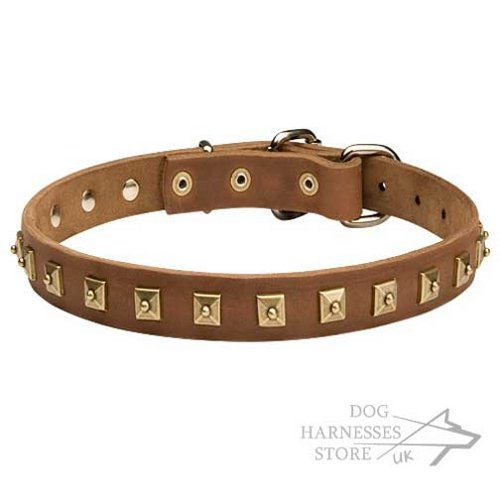 Leather Dog Collar, Studded