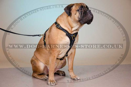 Bullmastiff Harness with Brass Buckle and Rings