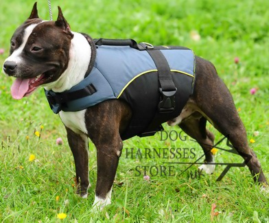 Staffy Dog Mobility Harness