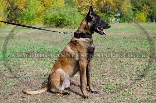 Nylon Dog Collar with Quick-Release Buckle for Malinois