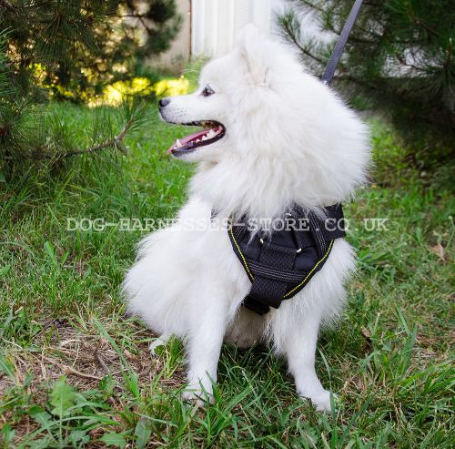 Nylon Dog Harness with Padded Chest Plate for Japanese Spitz