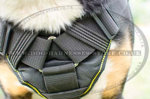 Greater Swiss Mountain Dog Harness