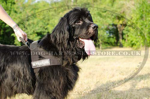 Newfoundland Dog Harness Uk