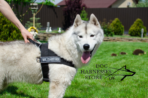 Adjustable Dog Harness for Husky UK