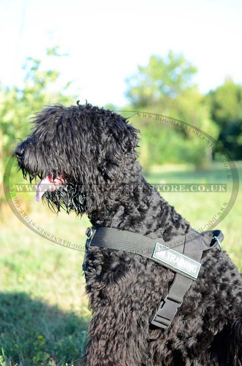 Comfortable Nylon Harness for Terrier Training