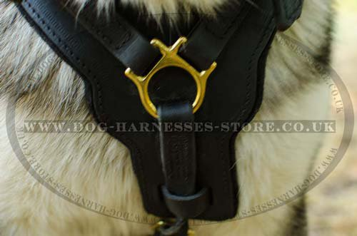 Padded Leather Dog Harness for Husky, Large UK