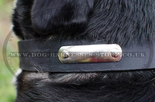 Leather Dog Collar with ID Tag for Swiss Mountain Dog