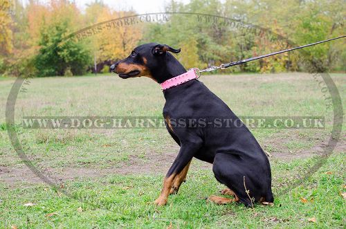 Pink Leather Dog Collar with Nickel Spikes for Female Doberman