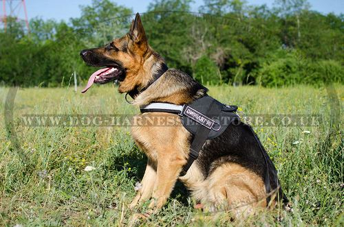 Nylon Dog Harness Reflective for GSD ➱ - £30.60