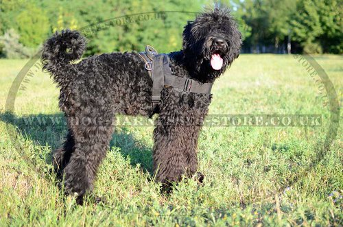 Black Russian Terrier Multi-Purpose Nylon Harness UK