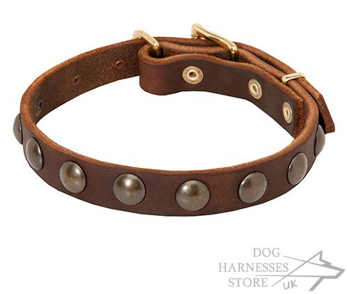 Small Dog Collar with Brass Studs for Little Breeds and Puppies