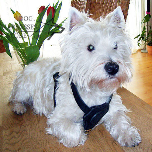 Small Dog Harness Padded Chest for West Highland White Terrier
