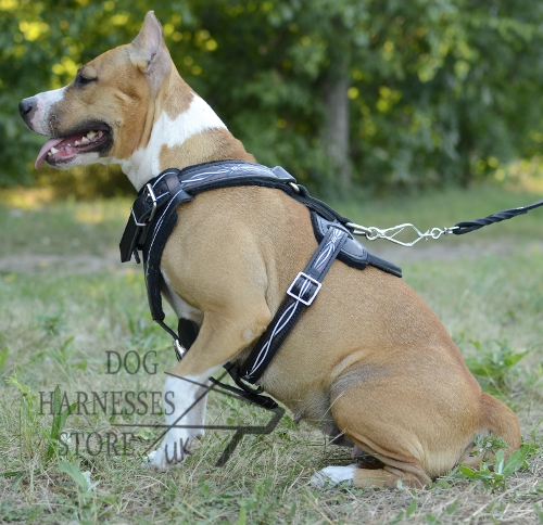 Staffy Dog Harness UK