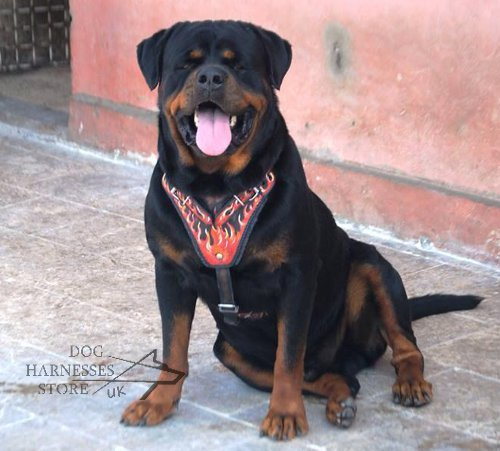 "Unique Leather Dog Harness with ""Flame"" Painting for Rottweiler"